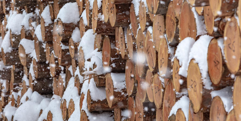 Cut tree-Estwatch-Marek-Okon